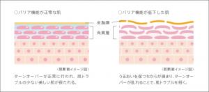 バリア機能とターンオーバーの関係