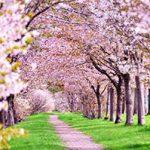 【春のスキンケア対策】敏感肌になりやすい季節!肌に優しいメンズスキンケア7選
